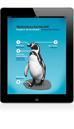 Penguinfo, conoce las diferentes especies de pingüinos.
