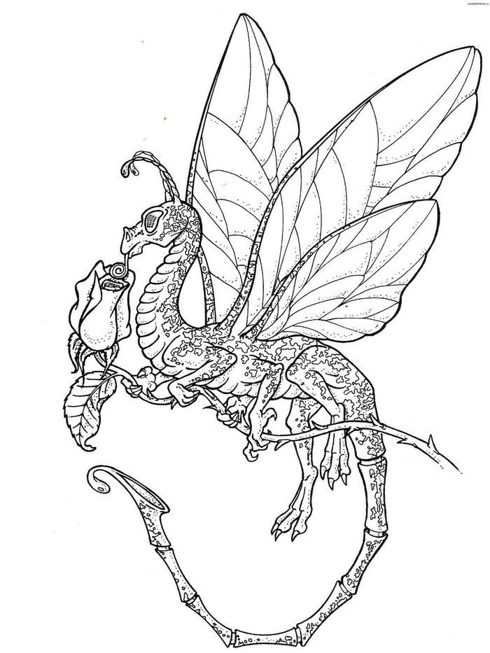 Butterfly Dragon Fantasy Coloring Pages Dragon Coloring Page Fairy Coloring Pages Free Coloring Pages