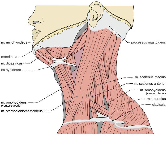 Stiff Neck (Torticollis or wryneck) exercises