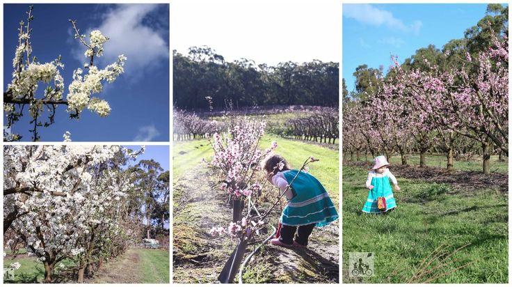rayners orchard, woori yallock