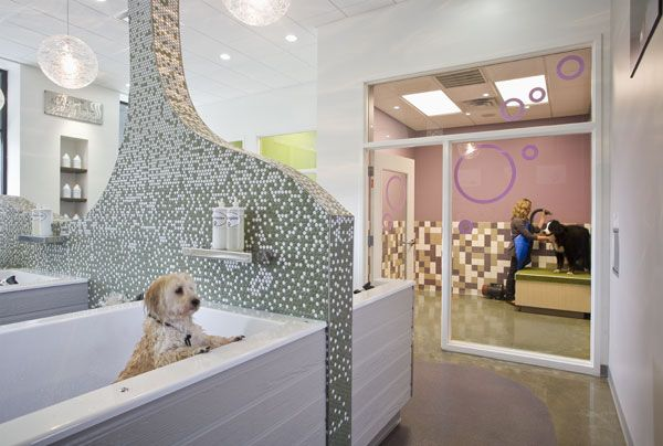 Imagine these retail store interior design dog spa for 4 paws pet salon