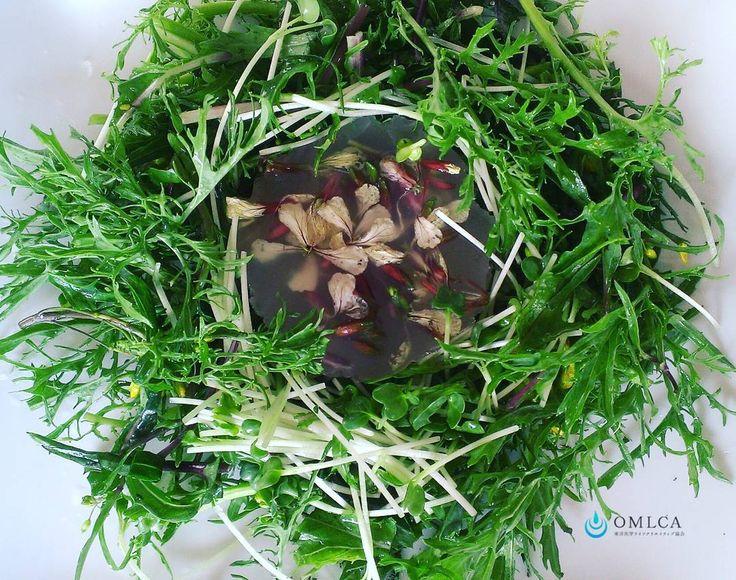 〈低糖質〉  久しぶりのレンバイで買ったルッコラの花でテリーヌ ジュレ ドレッシング代わりにサラダと和えていただきます♪  #低糖質#テリーヌ#ジュレ#ルッコラ#サラダ