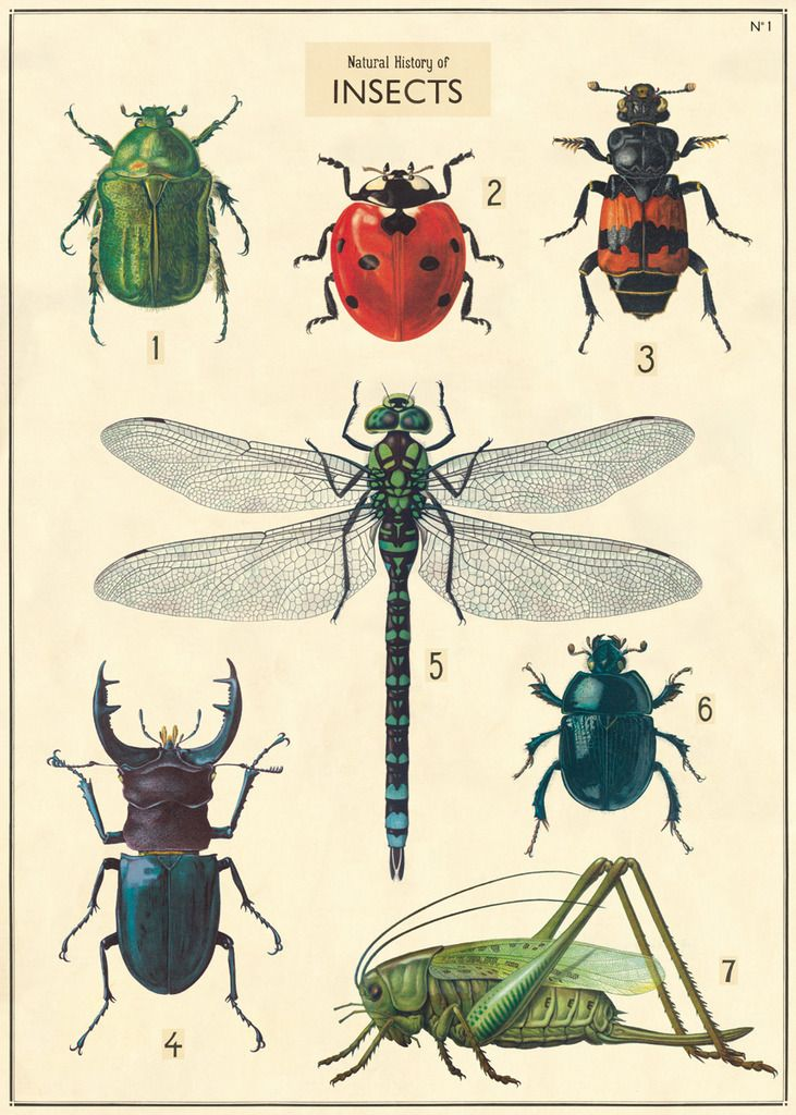 Poster/inpakpapier Insect chart - Cavallini & Co
