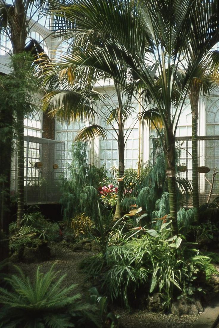 Palms inside the Ashton Memorial Butterfly House at Williamson Park, Lancaster City, England.