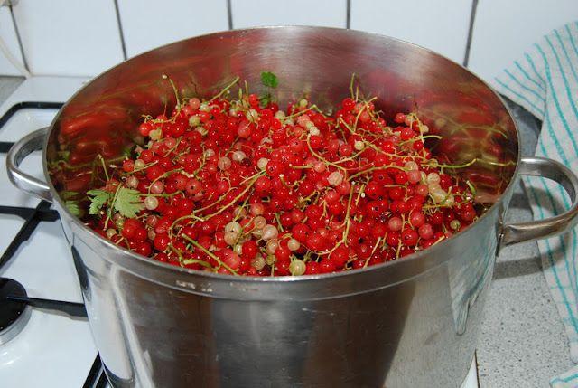 Fru Kubiks lækkerier: Ribsgelé