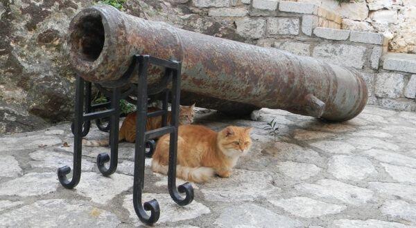 Uno dei problemi più fastidiosi da dover affrontare quando si possiede un gatto è quello dell'odore della sua urina. E' vero che i gatti sono animali molto puliti e che tendenzialmente fanno i loro bisogni nella loro lettiera, ma, può capitare che comincino a fare i loro bisogni anche in altri punti della casa come ad esempio coperte, divani, cuscini, ecc. Quando questo accade è un bel guaio, sia perché l'odore dell'urina dei gatti è molto forte e persistente ed è molto difficile da…