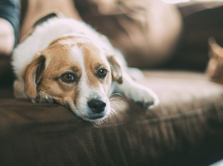 tipps zum leben mit hund wohnen interieur pinterest wohnen hunde und zuhause. Black Bedroom Furniture Sets. Home Design Ideas