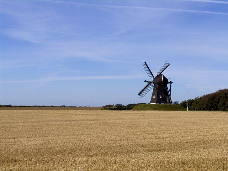 En vindmølla i en kornåker
