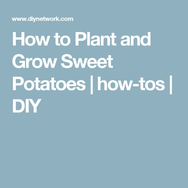 Quiet Corner Container Gardening Ideas: How To Plant And Grow Sweet Potatoes