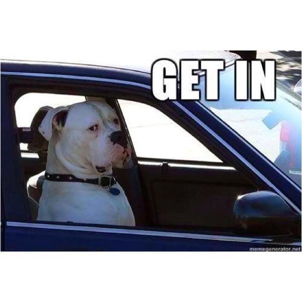 I find this a lot funnier than I should! American Bulldog!