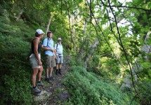 The Fynbos Trail - The Fynbos Trail is a unique nature experience in the heart of the Cape Floral Kingdom. This three-day, 26km trail (with optional extra coastal section) meanders through hidden pockets of indigenous forest alive with birds, past tumbling waterfalls and exquisite fynbos. It's a true voyage of discovery, led by expert guides who point out special plants and explain the role of birds, ants, fire and other participants in the symphony that is fynbos.