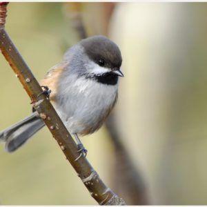 Cute Little Bird HD Wallpaper | cute little birds wallpaper