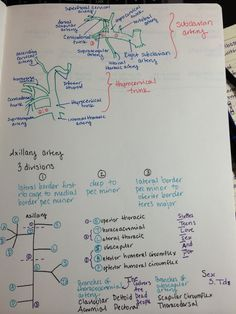 Above is my drawing of the subclavian artery branches and below is the axillary artery branches complete with their own dirty mnemonic. Study with me friends.