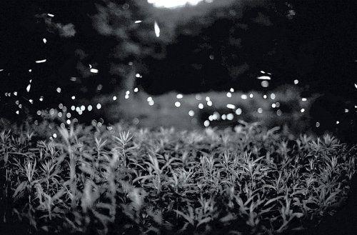 Gregory Crewdson: Fireflies by Gregory Crewdson,