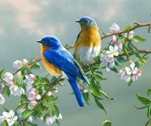 Színes veréb madár fényképezés