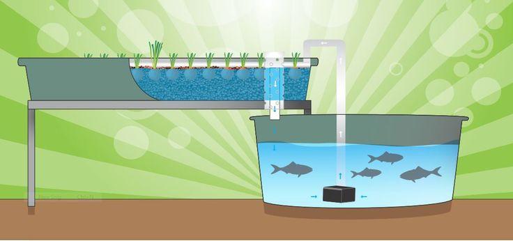 Running the System - Backyard Aquaponics