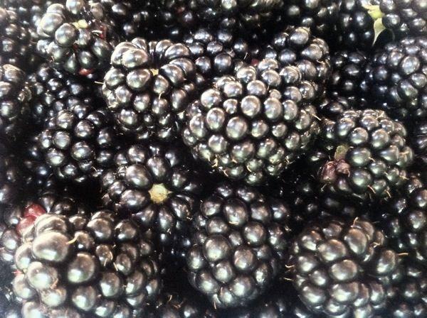 blackberries. poostebloom.de