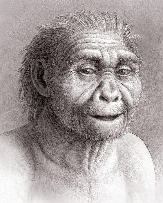 Mauricio Antón - Homo georgicus