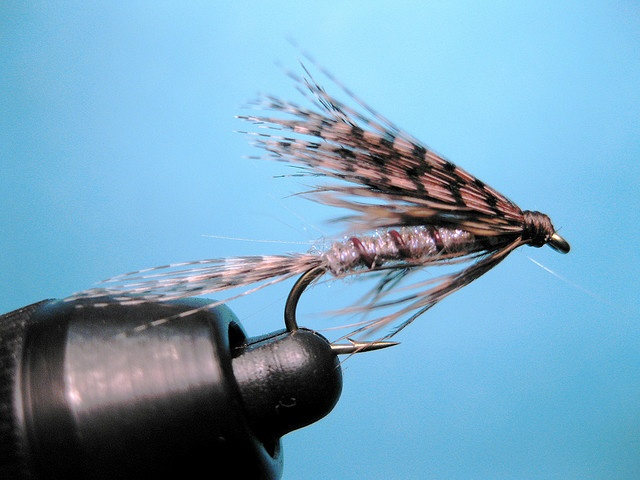 89 best wet flies images on pinterest fly tying patterns for Fly fishing lure