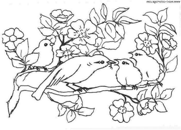 Coloriage Oiseaux 13 Original Coloriage Oiseaux Pictures