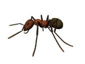 If you have a problem with ants, come and see what you can do about it
