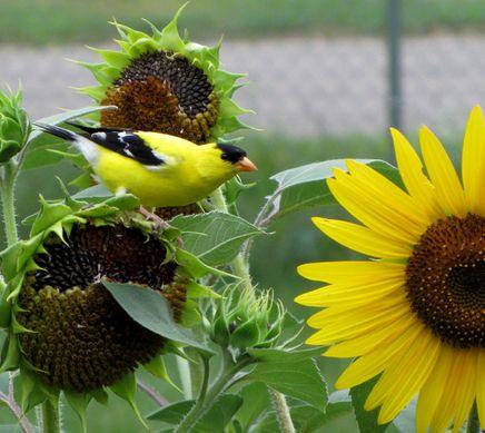 40 Best Images About Birdhouses Amp Birdfeeders On Pinterest