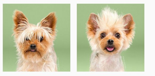 """Dogs with better hair than me! In """"Hairy,"""" Grace Chon Captures the Magic of Japanese Dog Grooming  #dogs"""