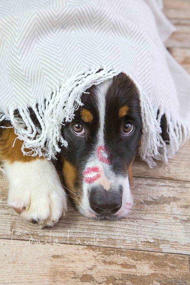 Sunny Von Bayern Hunde Fotos Hundefotos Susseste Haustiere