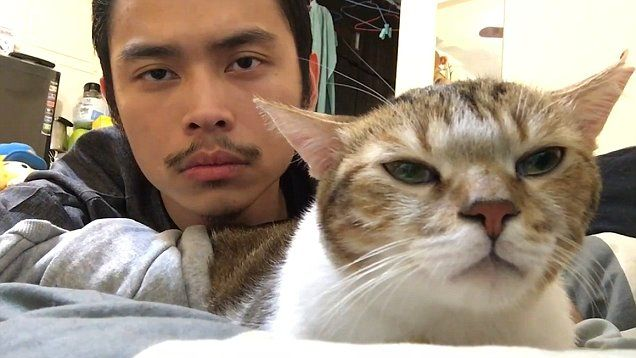 Cat bounces its head along with his owner to Drake's Hotline Bling.