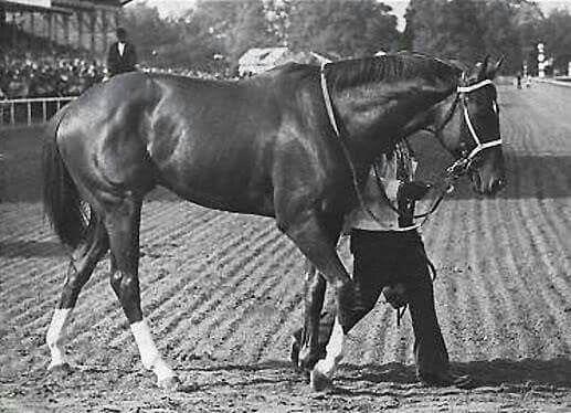 The Basics of Horse Racing Betting - Best Casinos & Betting