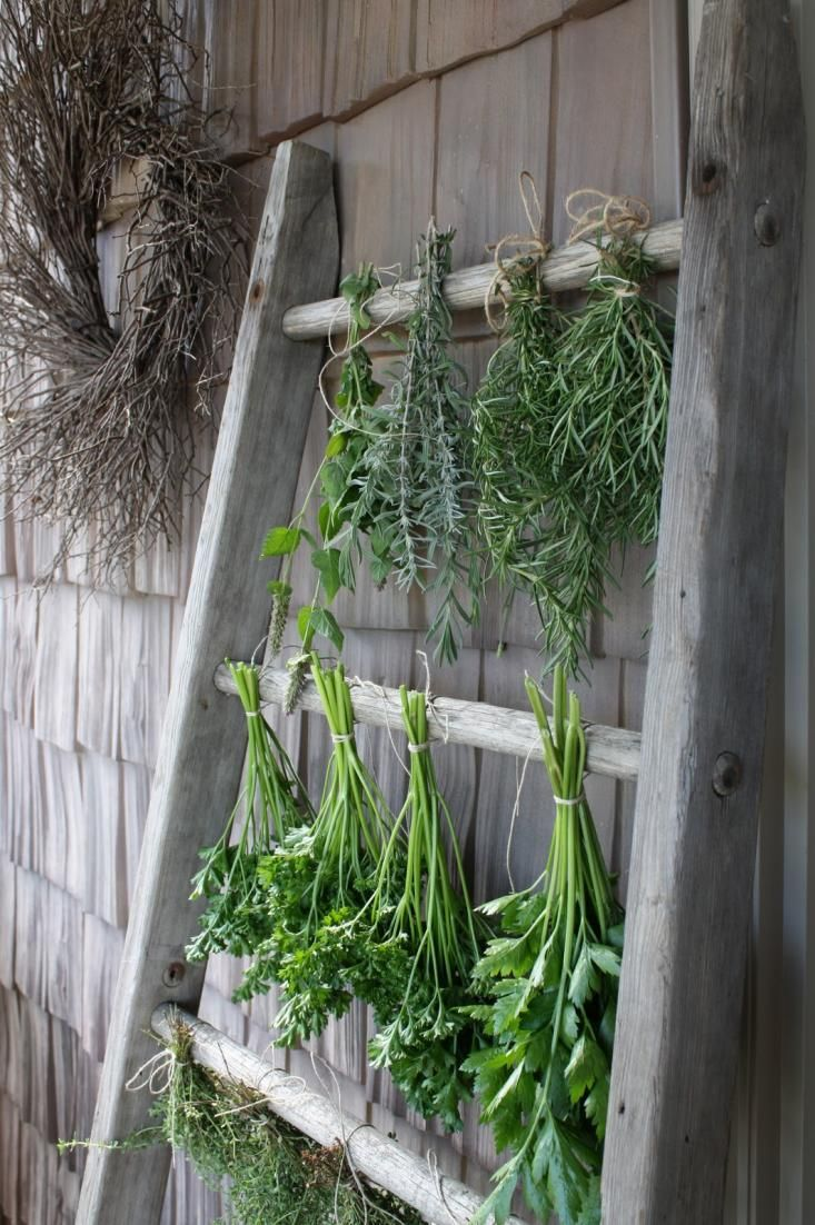 You can tie bouquets of rosemary, sage, anise, parsley, thyme, and lavender and hang them upside down to dry