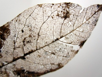 Geologist Nature lover.  Decaying leaves