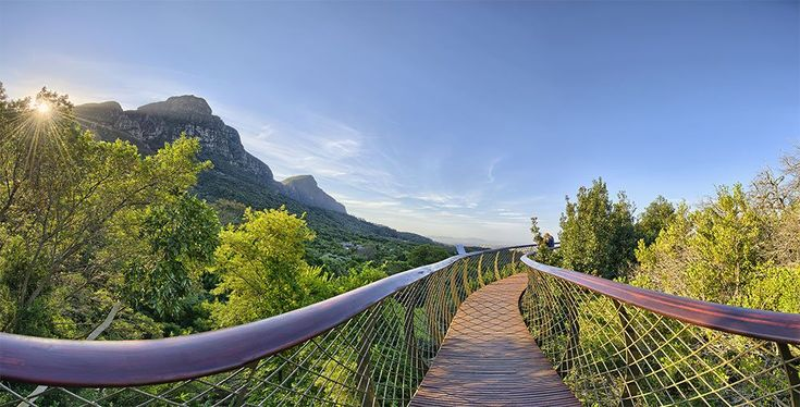 Things to do in Cape Town - kirstenbosch botanical gardens
