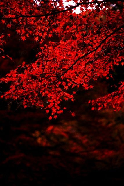 ☚ in rot ☛ – Red