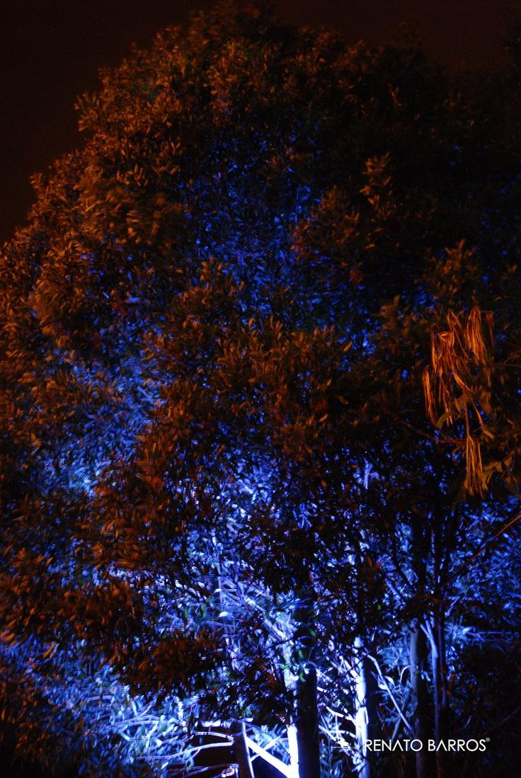 rboles iluminados en navidad desde el panecillo en la ciudad de quito