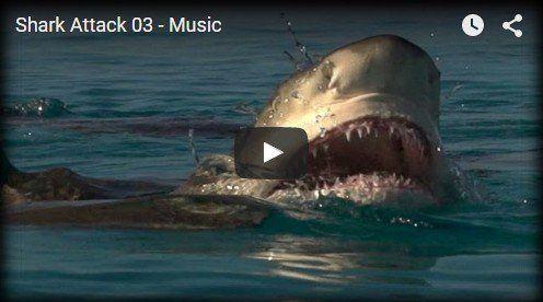 Shark Attack http://beautifulplace4travel.blogspot.kr/2015/11/shark-attack.html