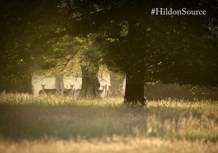 Savour the Bank Holiday today with a breathtaking image from our Hildon estate. #HildonSource