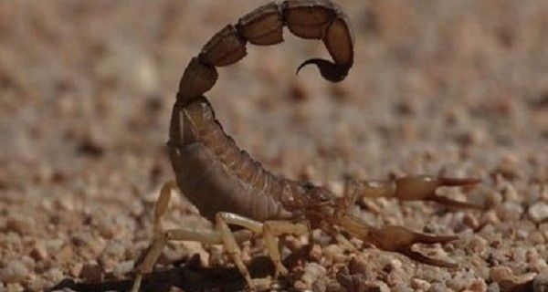 Este viernes se registraron cinco casos de mordeduras de serpientes y una picadura de escorpión en el Eje Panamericano del Sur del Lago, lamentablemente do