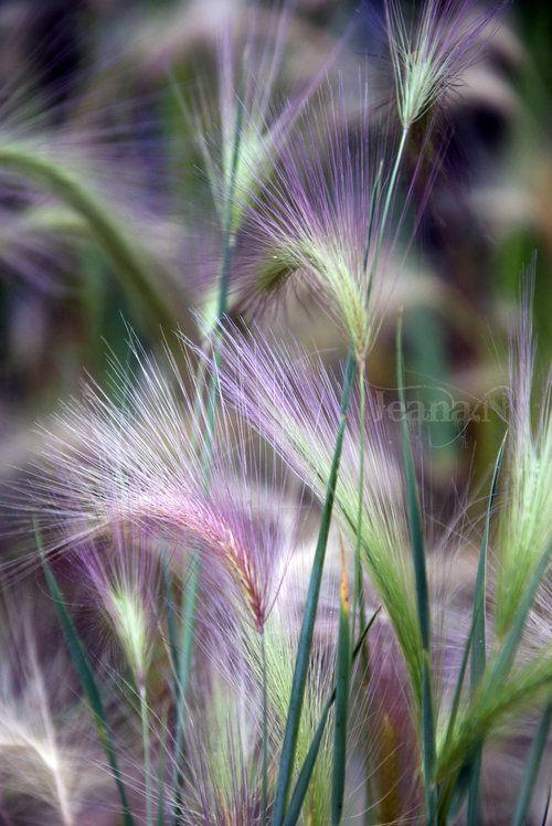 Grass.