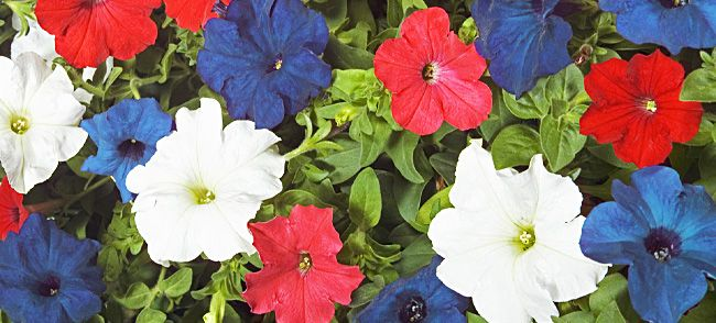 lowes memorial day weekend sales 2014