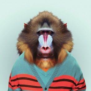 Illustration | Zoo Portraits - Yago Partal