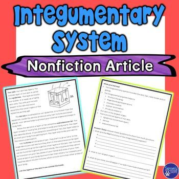 Integumentary System Nonfiction Article - Use this FREE resource with your 5th, 6th, and 7th grade classroom or home school students. Students will learn about the integumentary system and the human body, primarily the skin. This nonfiction reading comprehension article will introduce students to the parts and functions. Get the freebie now! {fifth, sixth, seventh graders}