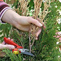 Die Waldrebe, oder auch Clematis gilt als robuste, wiederstandsfähige und äußerst charmante Pflanze. Für den richtigen Umgang mit ihr gibt es einiges zu beachten. Hier erfahren Sie mehr zum Schnitt und der richtigen Pflanzung.