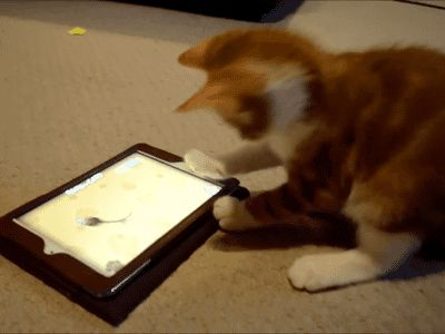 This kitten who can't seem to catch the animated mouse. | 28 Cats Having A Way Worse Day Than You