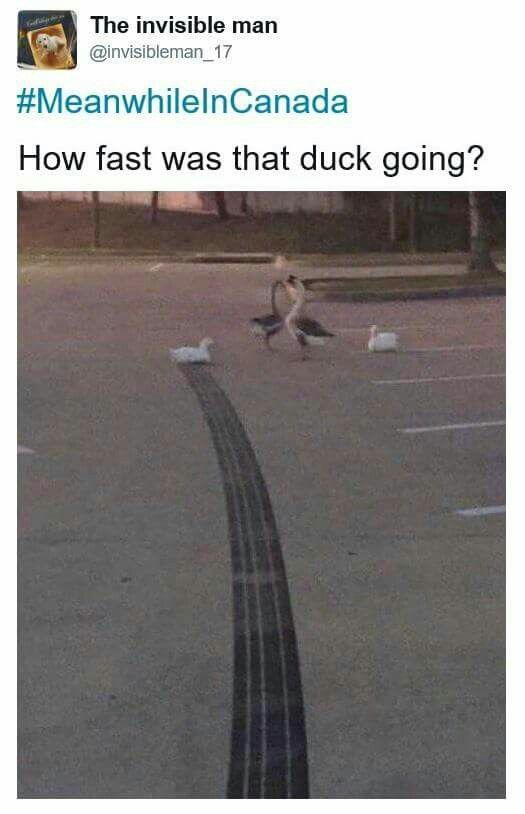 How fast was that duck going ?