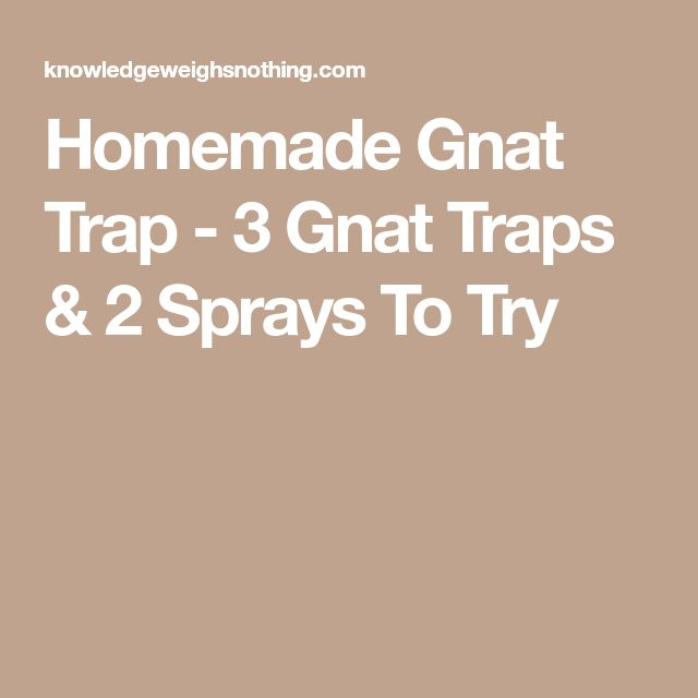 Homemade Gnat Trap - 3 Gnat Traps & 2 Sprays To Try