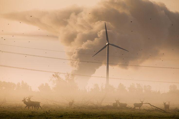 De Oostvaardersplassen zijn een prachtig uitzicht vanuit het Oostvaardersbos. Bewonder een aantal grazende dieren tijdens de wandelroute Egelpad. Volg de rode route voor een wandeling van 2 kilometer. Start op Jac. P Thijsenplaats, Almere-Buiten.