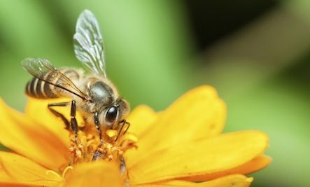 Help the Bees With This DIY Bee Water Garden!