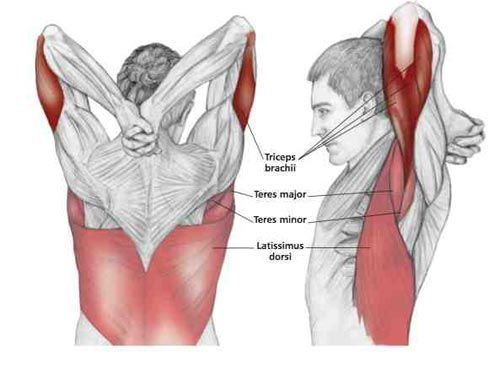 Reaching Downn Chest Stretch - Common Shoulder Stretching Exercises | FrozenShoulder.com