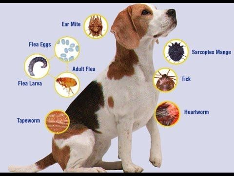 healing pets from heartworm naturally